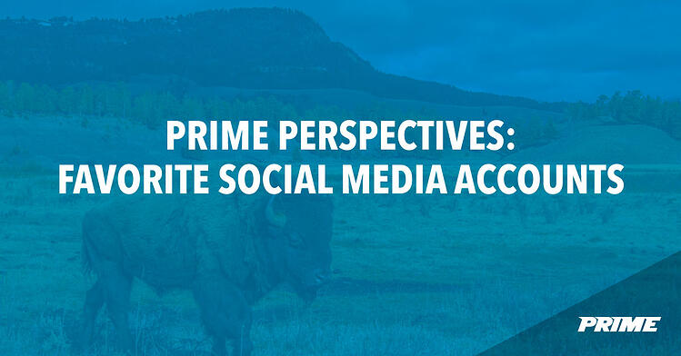 Prime Perspectives: Favorite Social Media Accounts